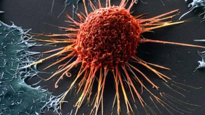 Естественные способы борьбы с раком
